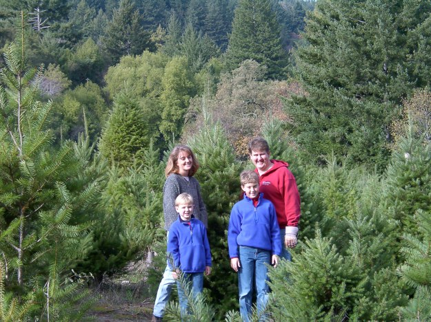 Selecting a Christmas tree in 2001